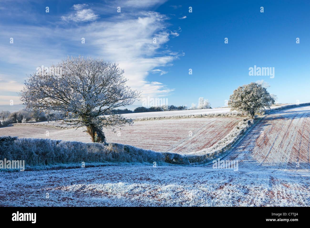 Les terres agricoles et les arbres givrés de givre en hiver, arc, Mid Devon, Angleterre. Hiver (décembre) Photo Stock