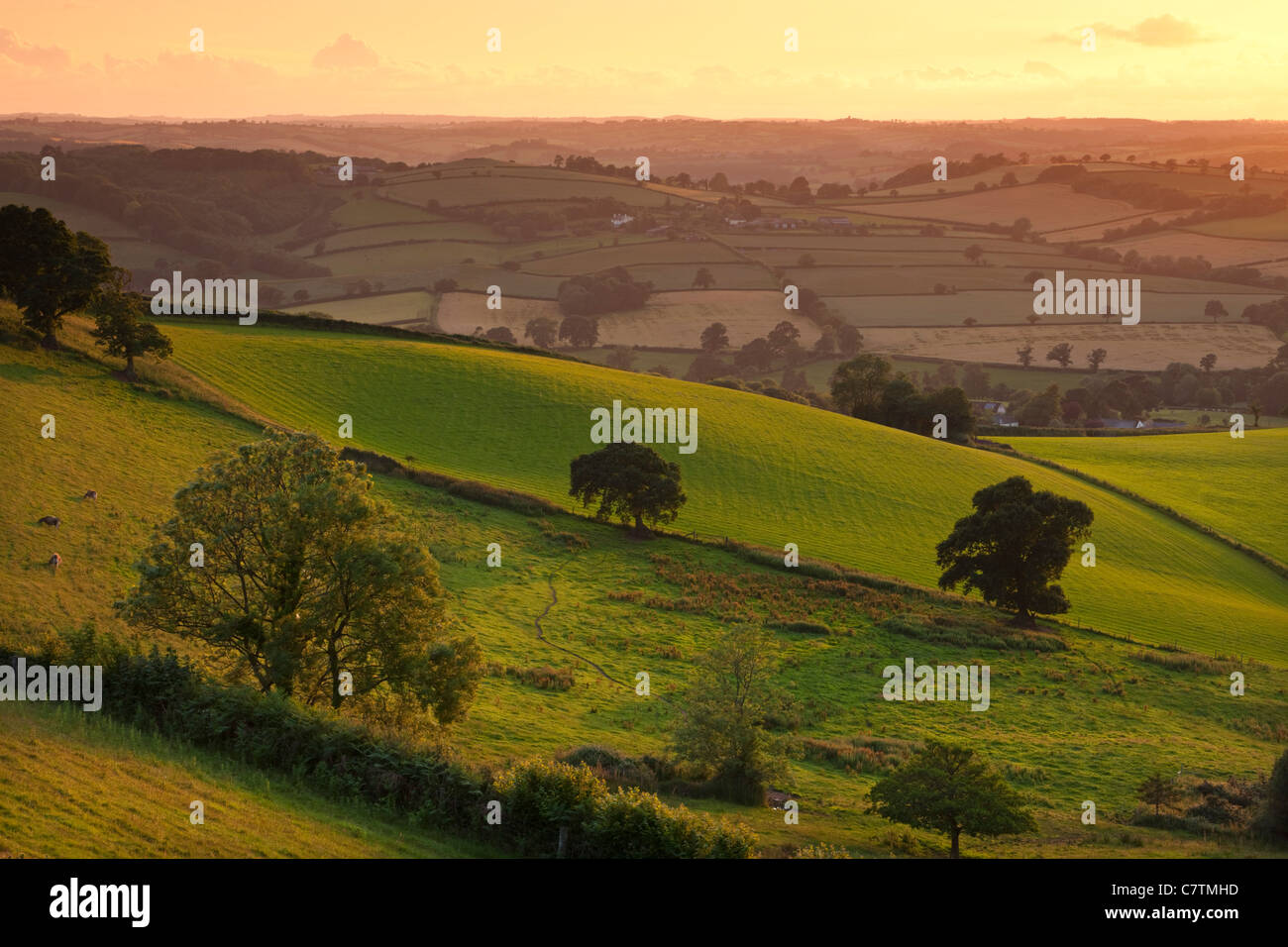 La lumière du soleil du soir sur le champs ondulants, Devon rural de Raddon Hills, Devon, Angleterre. En été Photo Stock