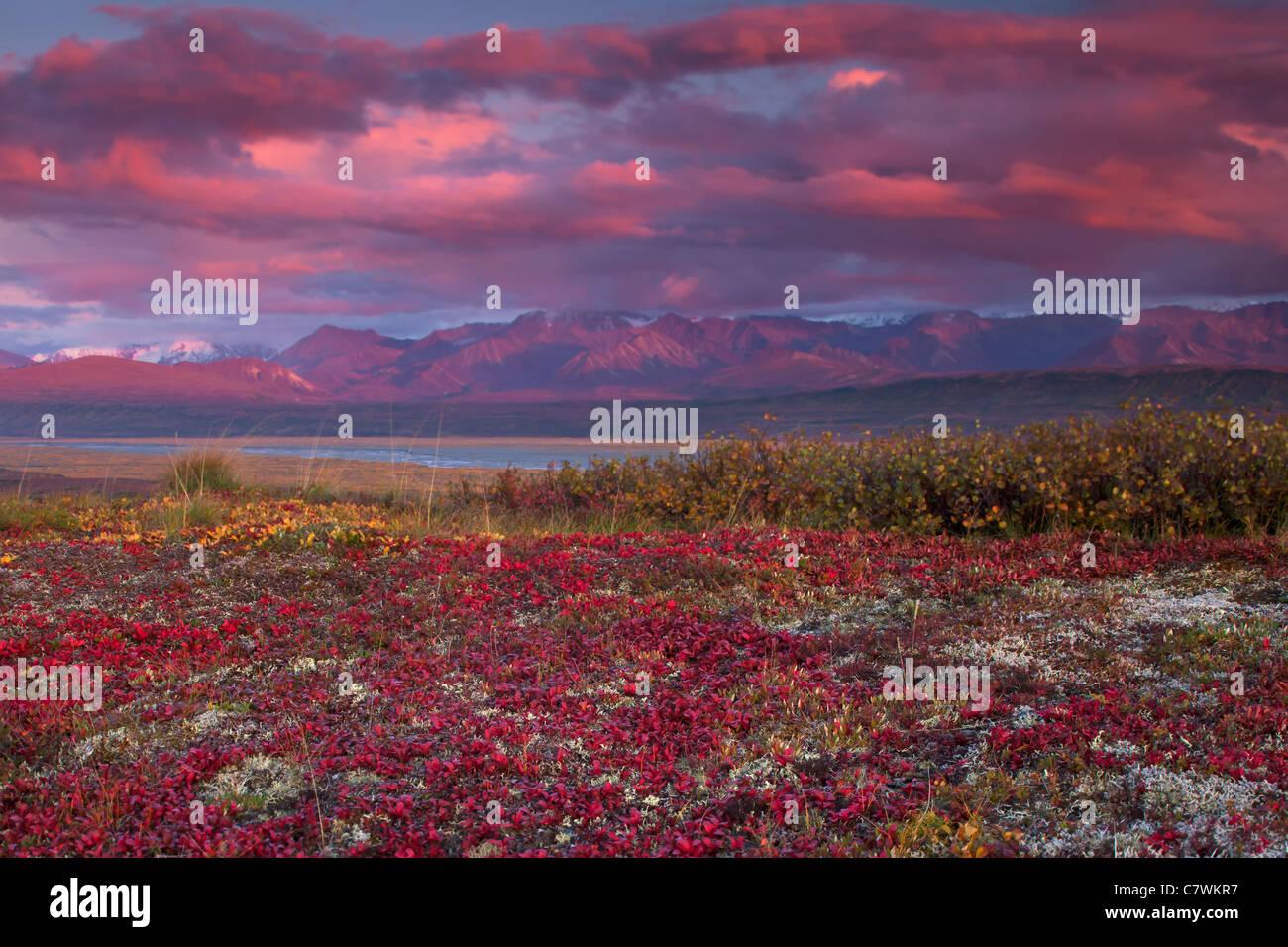 Mt. McKinley Denali, ou le parc national Denali, en Alaska. Photo Stock