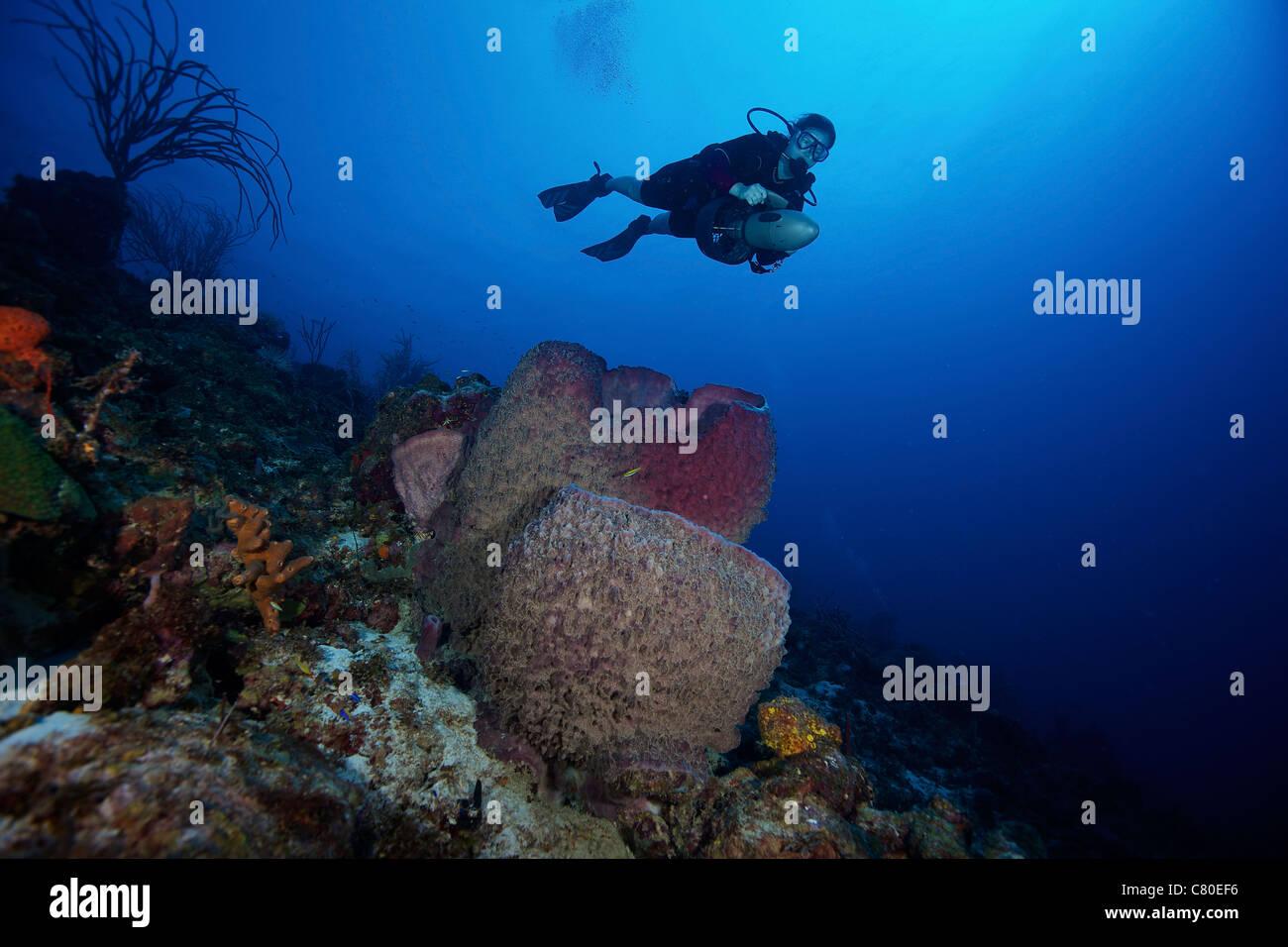 Scuba Diver propulse au-dessus d'un grand baril éponge, Bonaire, des Caraïbes aux Pays-Bas. Photo Stock
