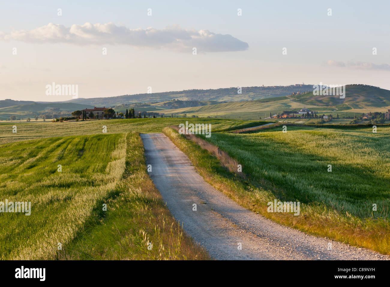 Italie, Toscane, Crète, Val d'Orcia, Vue du chemin vers la ferme Photo Stock