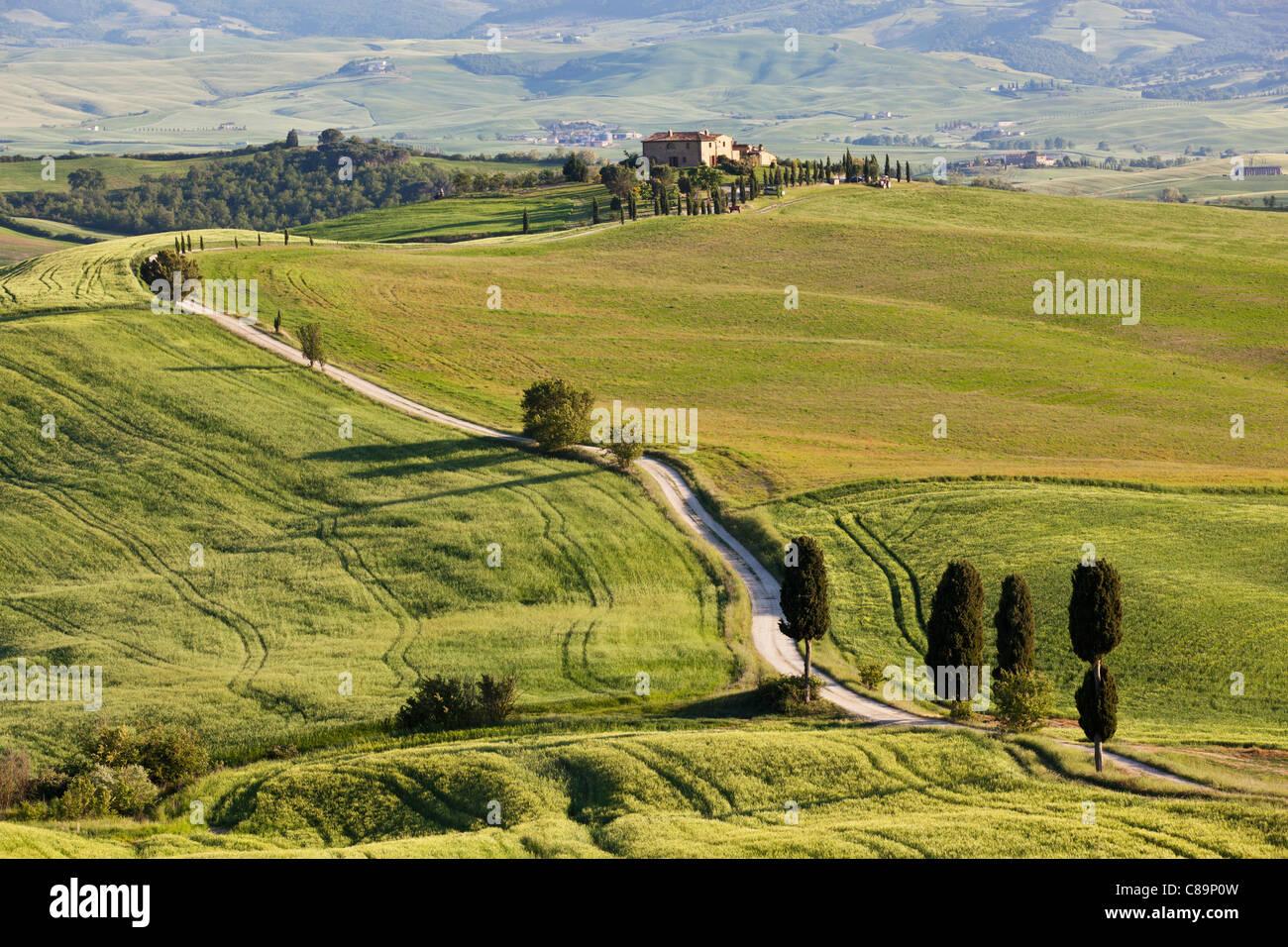 Italie, Toscane, Val d'Orcia, vue sur paysage vallonné et ferme avec des cyprès Photo Stock