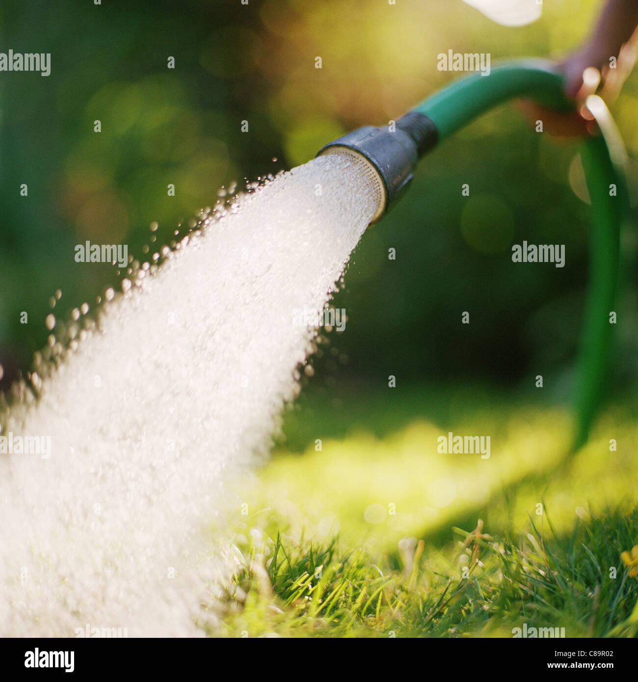 Tuyau d'arrosage pulvériser de l'eau dans le jardin Banque D'Images