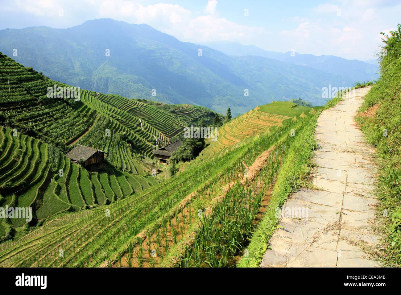 Les champs de riz en terrasse Ping'an, Chine Photo Stock