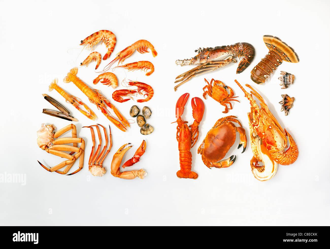 Composition de fruits de mer Photo Stock