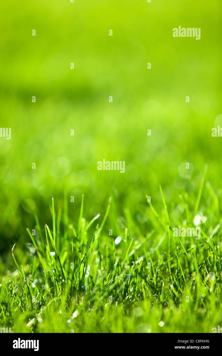Contexte : la nature de l'herbe luxuriante vert. Photo Stock