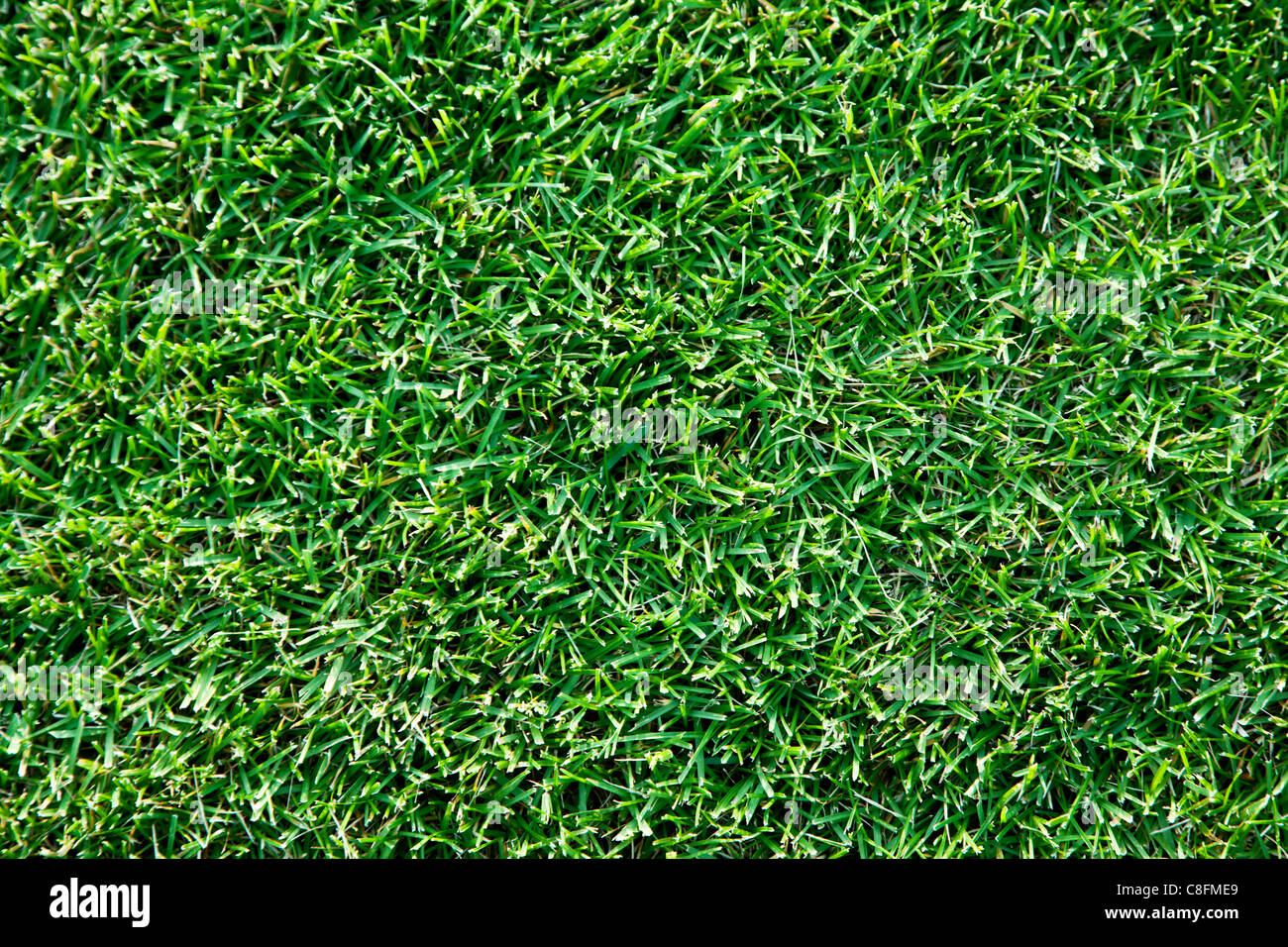 Close up shot of fresh spring geen herbe. Photo Stock