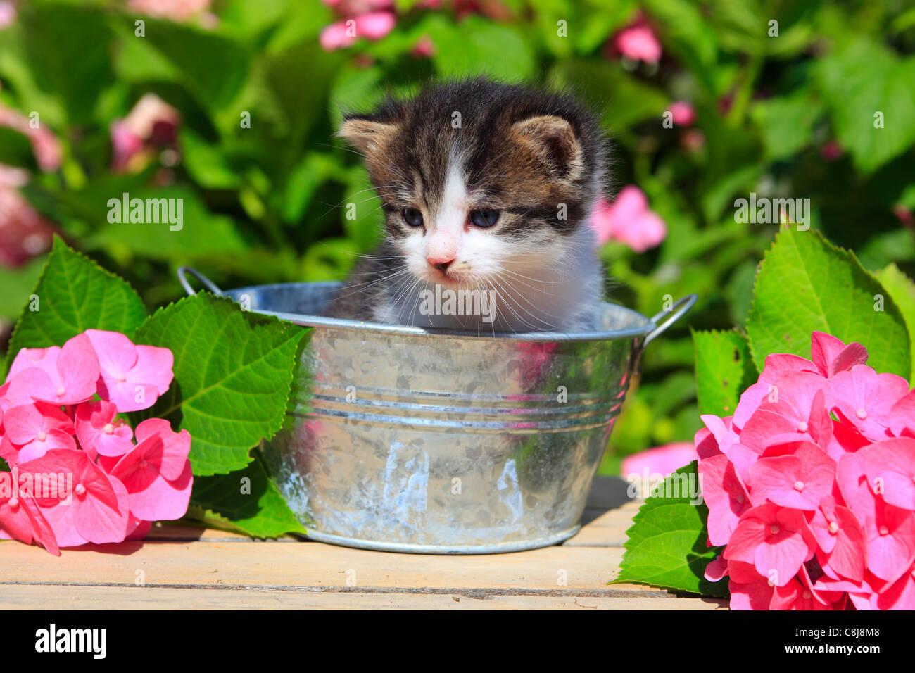 3 semaines, fleur, fleurs, jardin, maison, maison, Animal, animal domestique, animal et les jeunes, chat, jug, chaton, Photo Stock