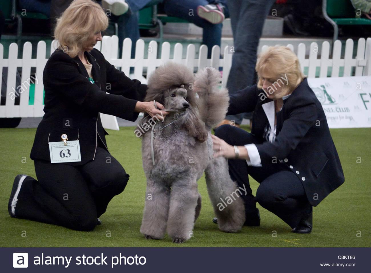 Les Londoniens: Découvrez Dog Show à Earls Court, Londres Photo Stock