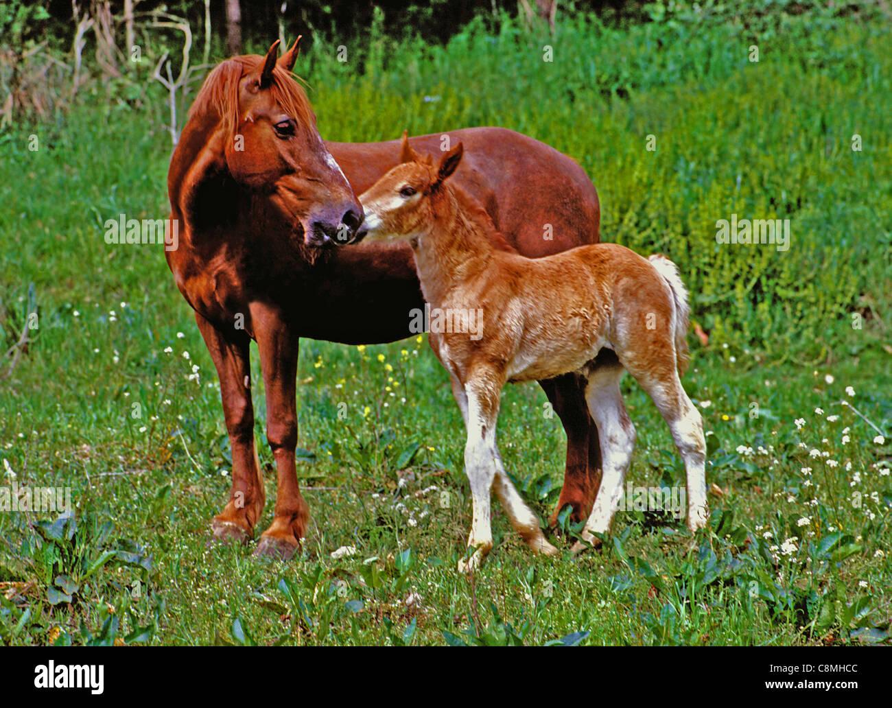 Maternité. Photo Stock