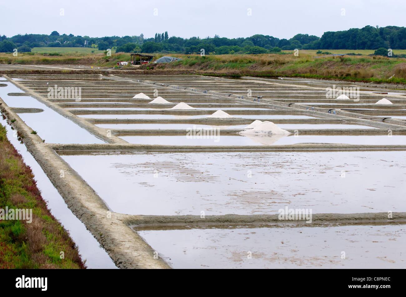 Fleur de sel (sel de mer récoltés à la main) de l'écrémé lits de sel à proximité Photo Stock