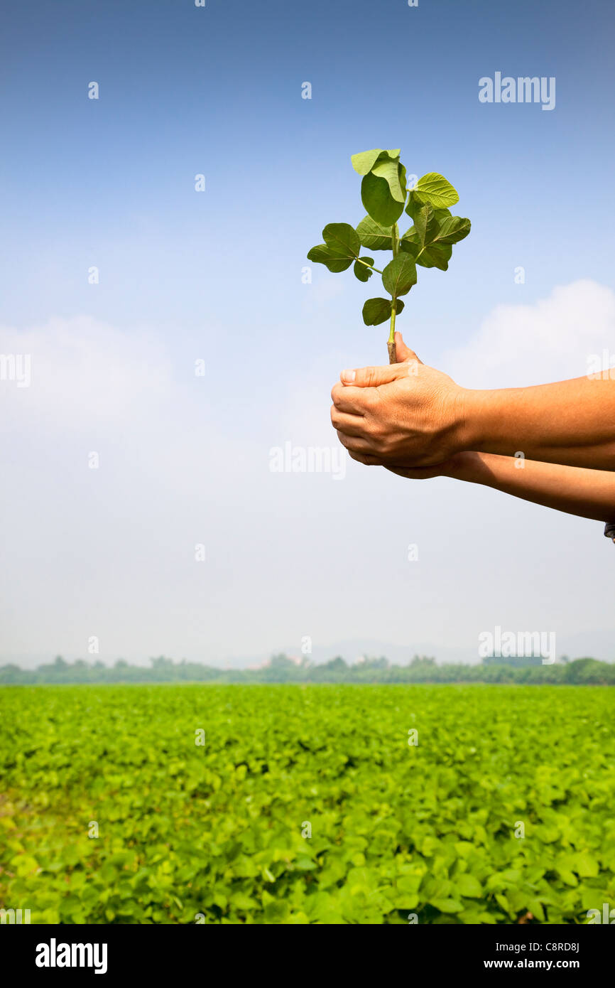 Main de farmer holding plants à la ferme Banque D'Images