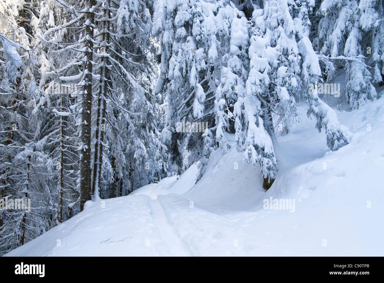 Paysage d'hiver avec snoeshoe sur piste de montagne Alpes, Zwiesel près de Bad Toelz, Upper Bavaria, Germany, Photo Stock