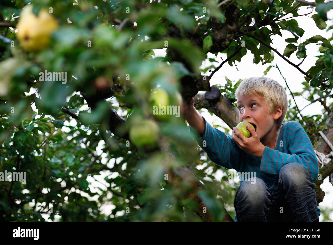 Boy eating in fruit tree Photo Stock