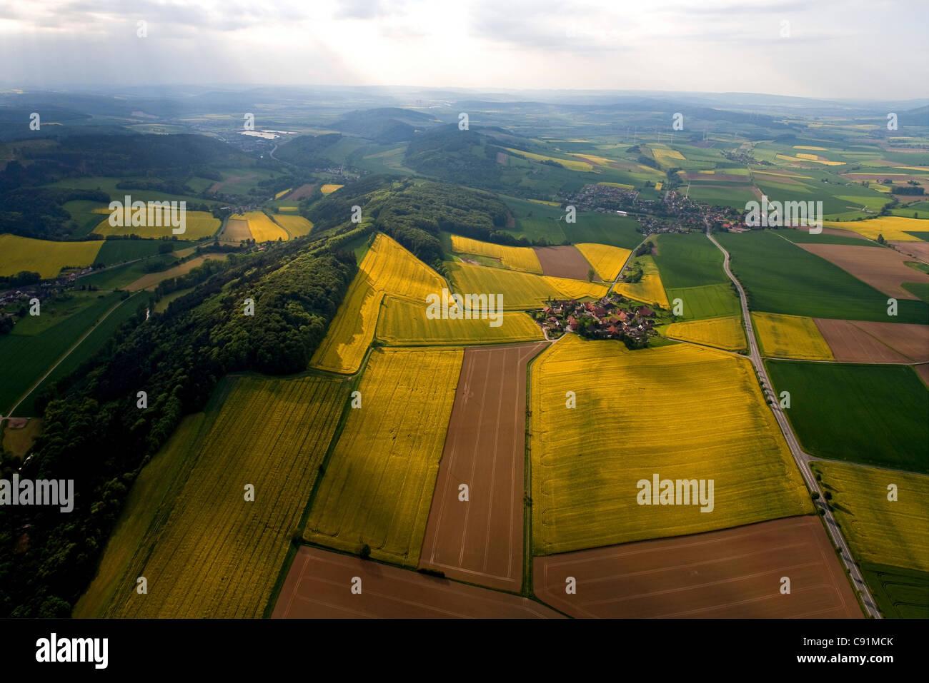 Vue aérienne de champs de colza en fleurs, dans le village de Tuchtfeld Weser Hills, Virginia, United States Banque D'Images