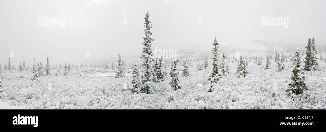Paysage panoramique de la première neige sur les sapins et la toundra, Denali National Park, de l'Intérieur, Photo Stock
