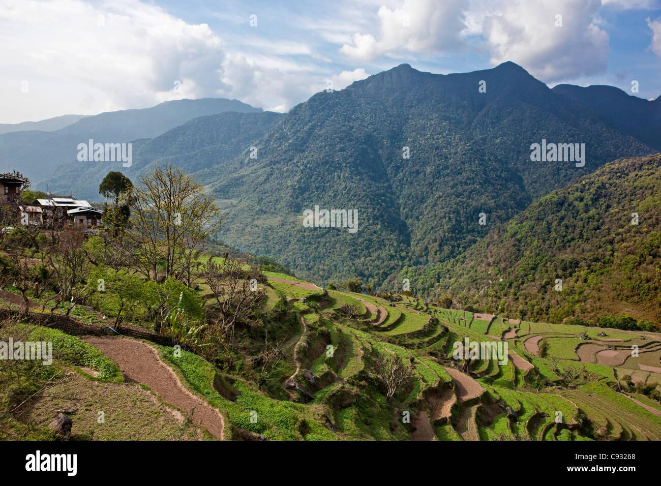 L'agriculture en terrasses sur une colline dans la vallée Mangde Chhu. Photo Stock