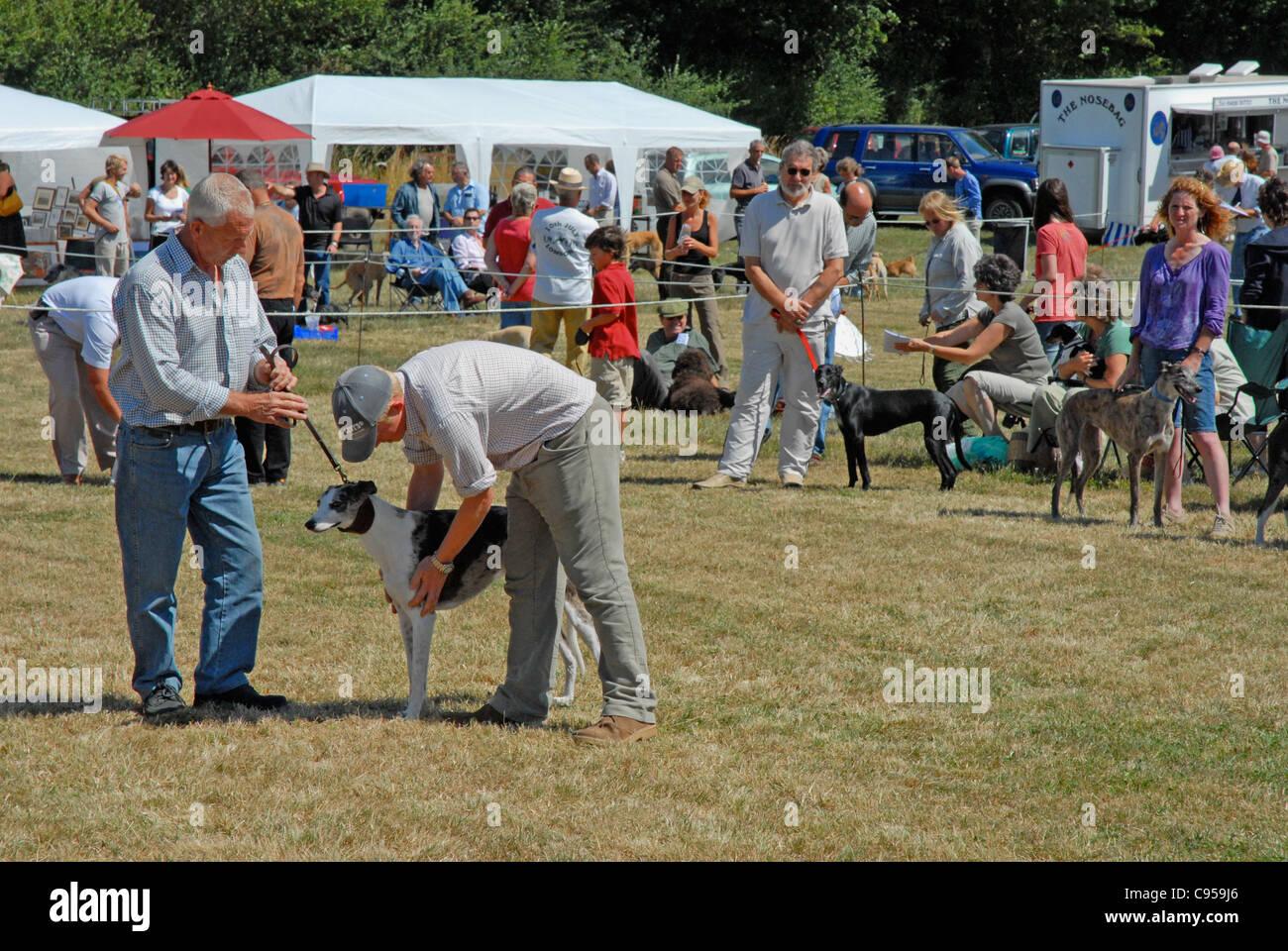 Un pays dog show Editorial uniquement. Boules à croix dans le Sussex. Photo Stock