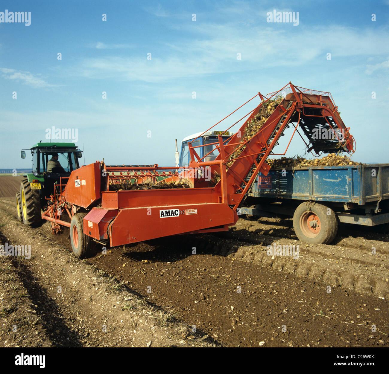 Tracteur John Deere & AMAC ascenseur surmontée de récolte récolte de pommes de terre Photo Stock