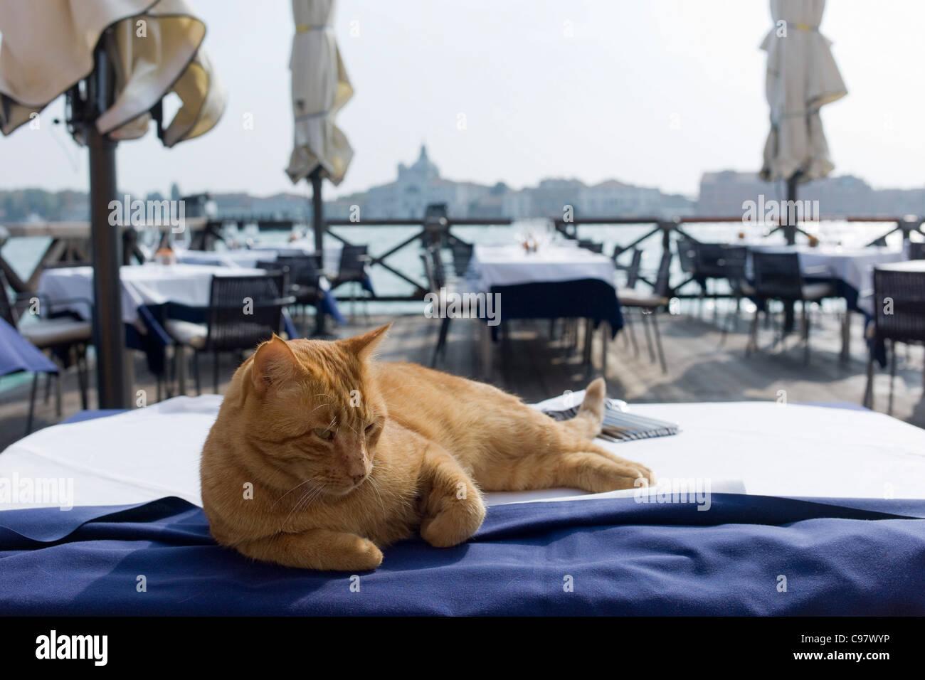 Lazy cat allongé sur une table de restaurant à Canale della Giudecca, Venise, Vénétie, Italie, Photo Stock