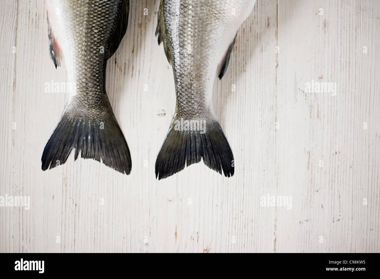 Les queues des deux poissons côte à côte Photo Stock