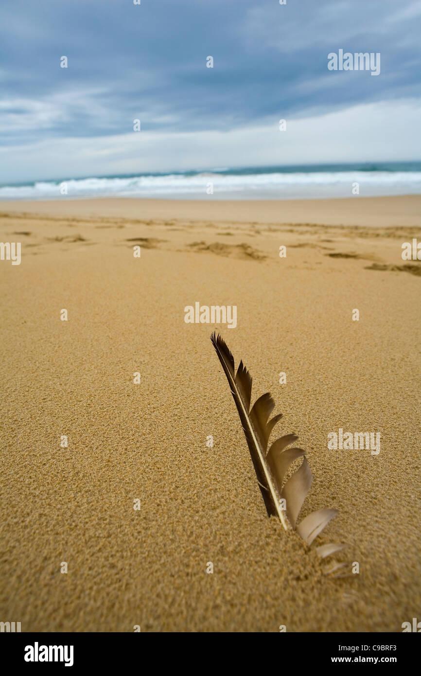 Vue rapprochée de plume d'oiseau dans le sable de la plage, Sardaigne Bay, Port Elizabeth, Eastern Cape Photo Stock