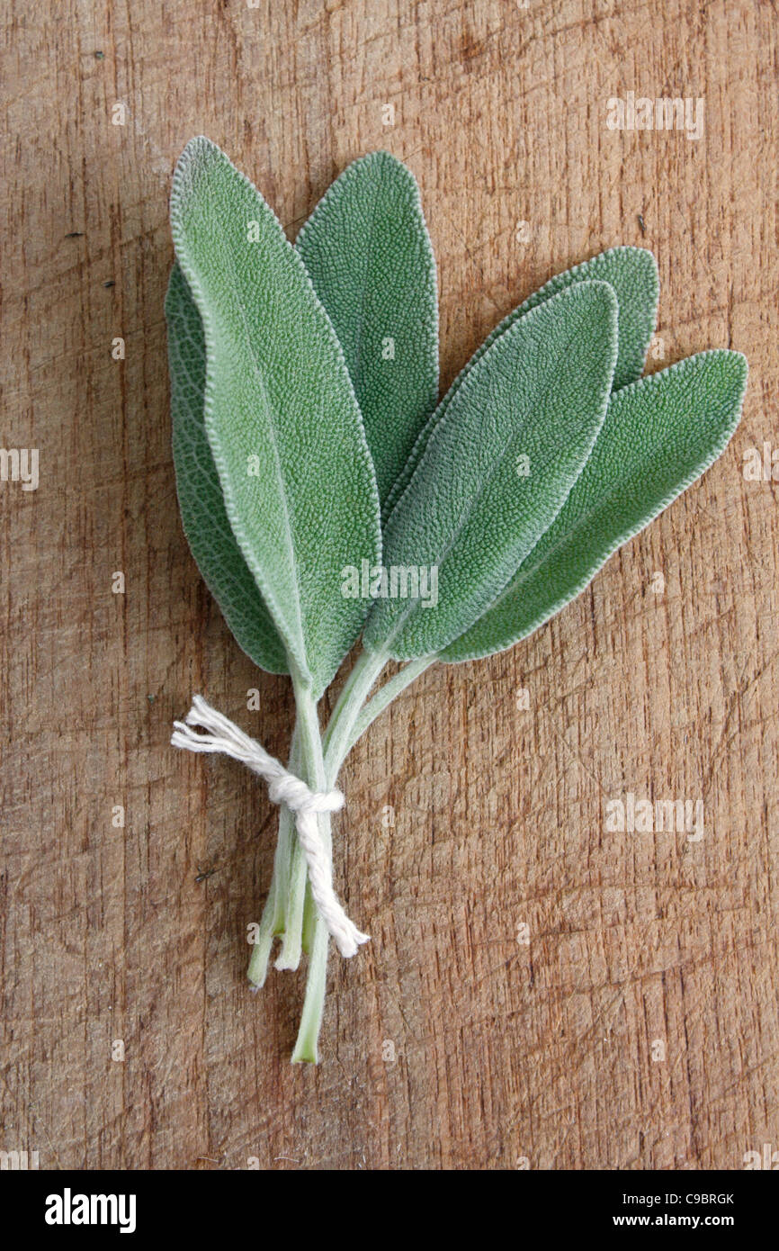Sage sur un fond de bois Photo Stock