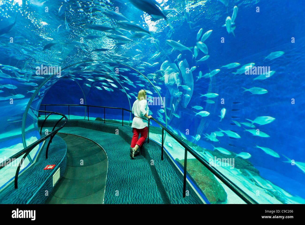 Woman à Shanghai ocean Aquarium, République populaire de Chine, République populaire de Chine, l'Asie Photo Stock