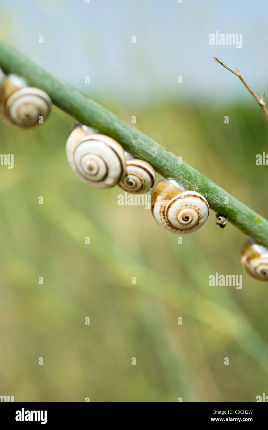 Escargots sur branch Banque D'Images