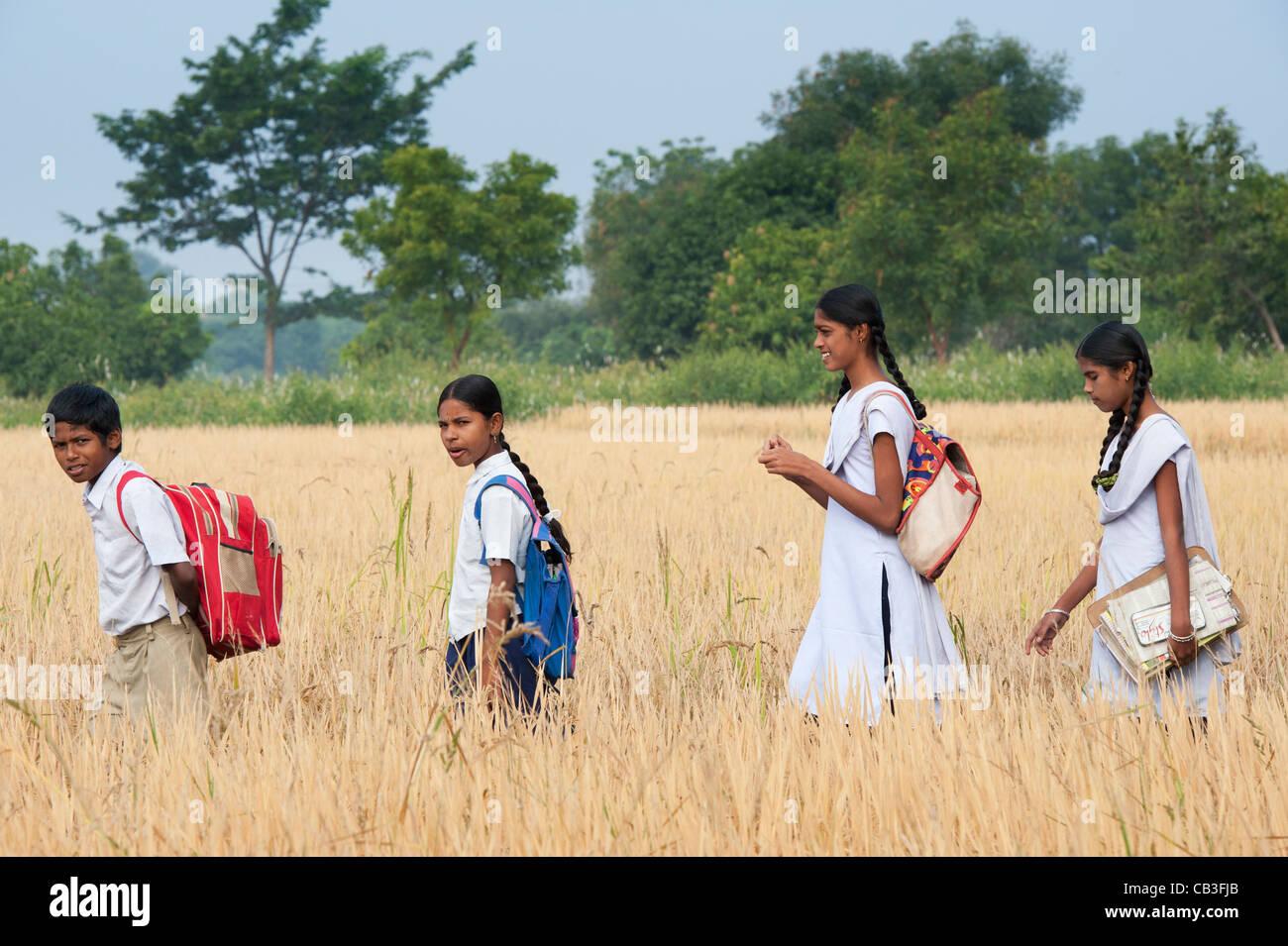 Les enfants indiens à l'école à pied à travers rizières de riz mûr. L'Andhra Photo Stock
