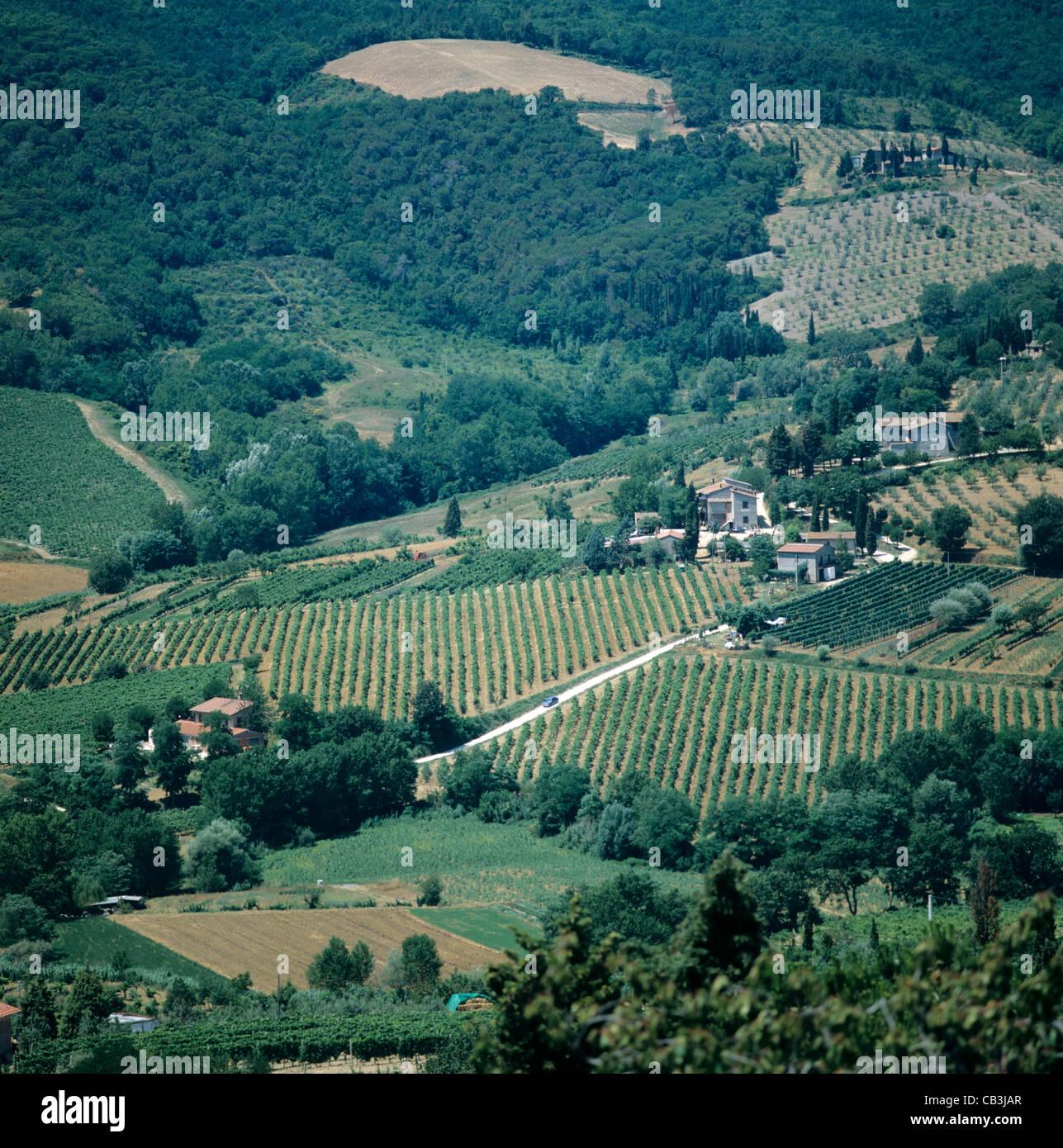 Vignes et oliviers en Toscane Terre agricole, Italie Photo Stock