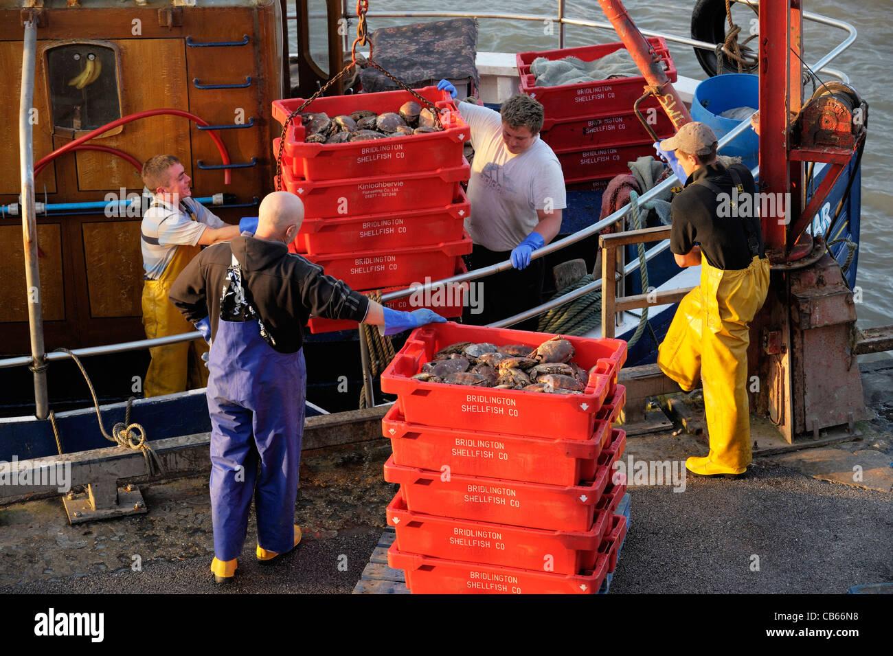 Mer du Nord pêcheurs déchargent de captures de crabes de bateau de pêche, à l'East Yorkshire Photo Stock