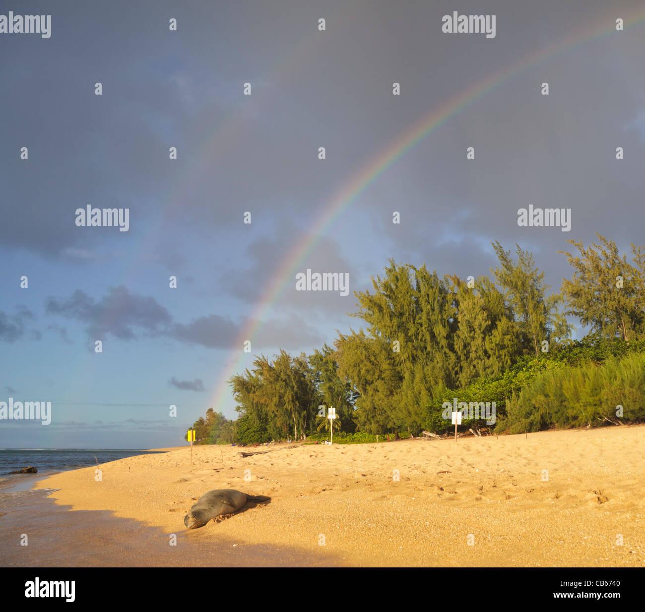 Le phoque moine hawaiien repose sur plage à Haena, Kauai, près de la plage de tunnels à double couleur arc-en-ciel le ciel Banque D'Images
