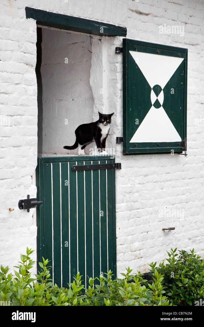 Chat de maison domestique (Felis catus) dans la porte de ferme, Belgique Photo Stock