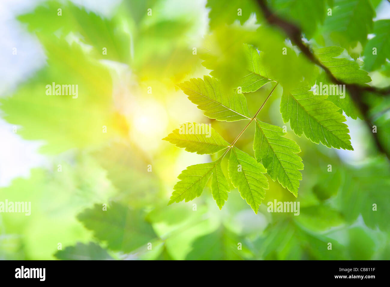La lumière du soleil à travers les feuilles Photo Stock