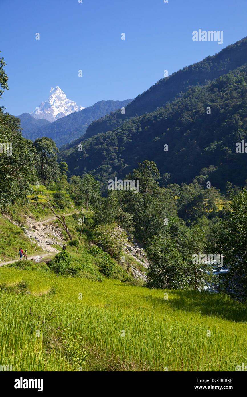 Trek de Ghandruk à Nayapul, vues de Machhapuchhare, queue de poisson, sanctuaire de l'Annapurna, Népal, Photo Stock