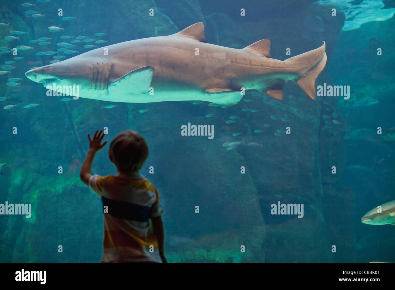 Garçon admirer dans l'aquarium des requins Photo Stock