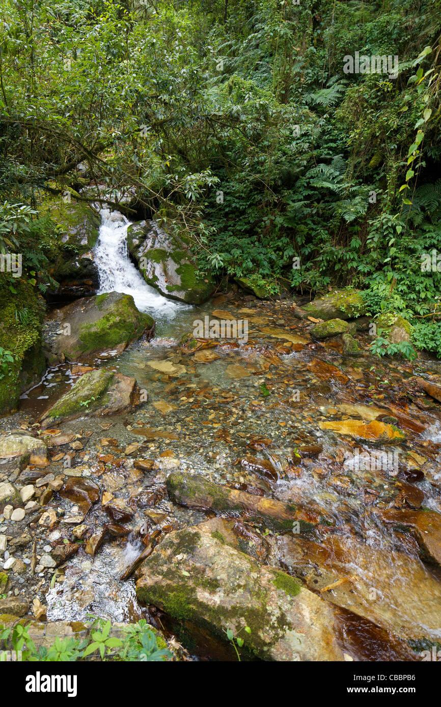 Le trek à partir de la chute d'Ulleri à Ghorepani, sanctuaire de l'Annapurna, Région de l'Himalaya, Photo Stock
