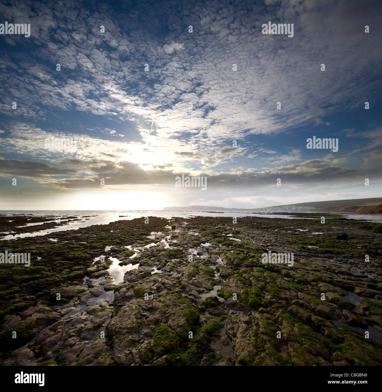 Les fossiles, dinosaure, wealden jumeaux, wessex, vectis, formations, coastall, érosion, Compton Bay, île Photo Stock