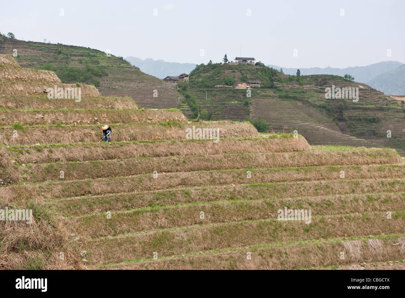 Ping'an au travailleur des terrasses de riz en Chine Photo Stock