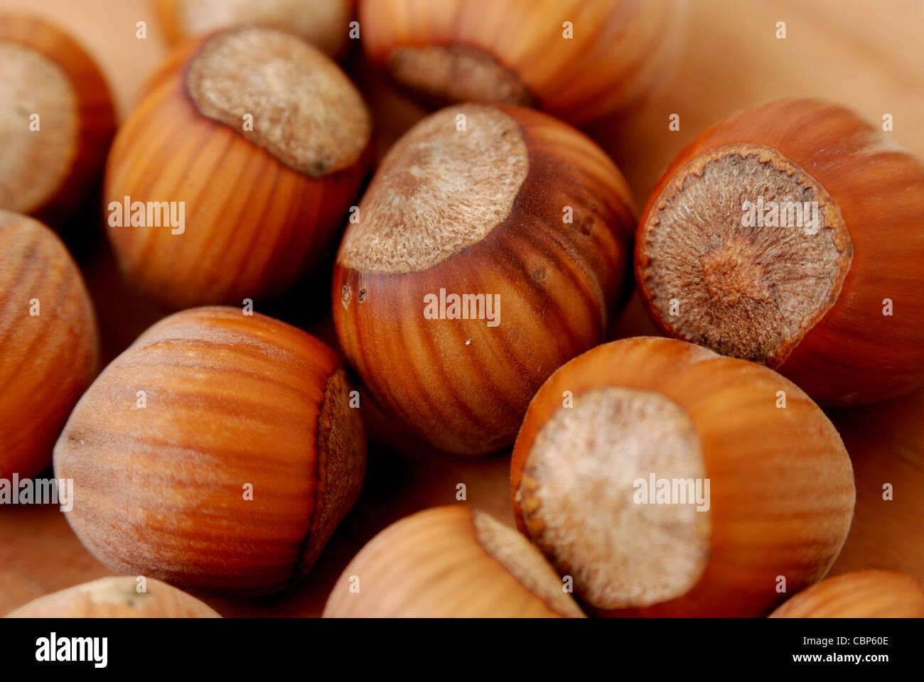 Close up de noisette fruits nutritifs. Photo Stock