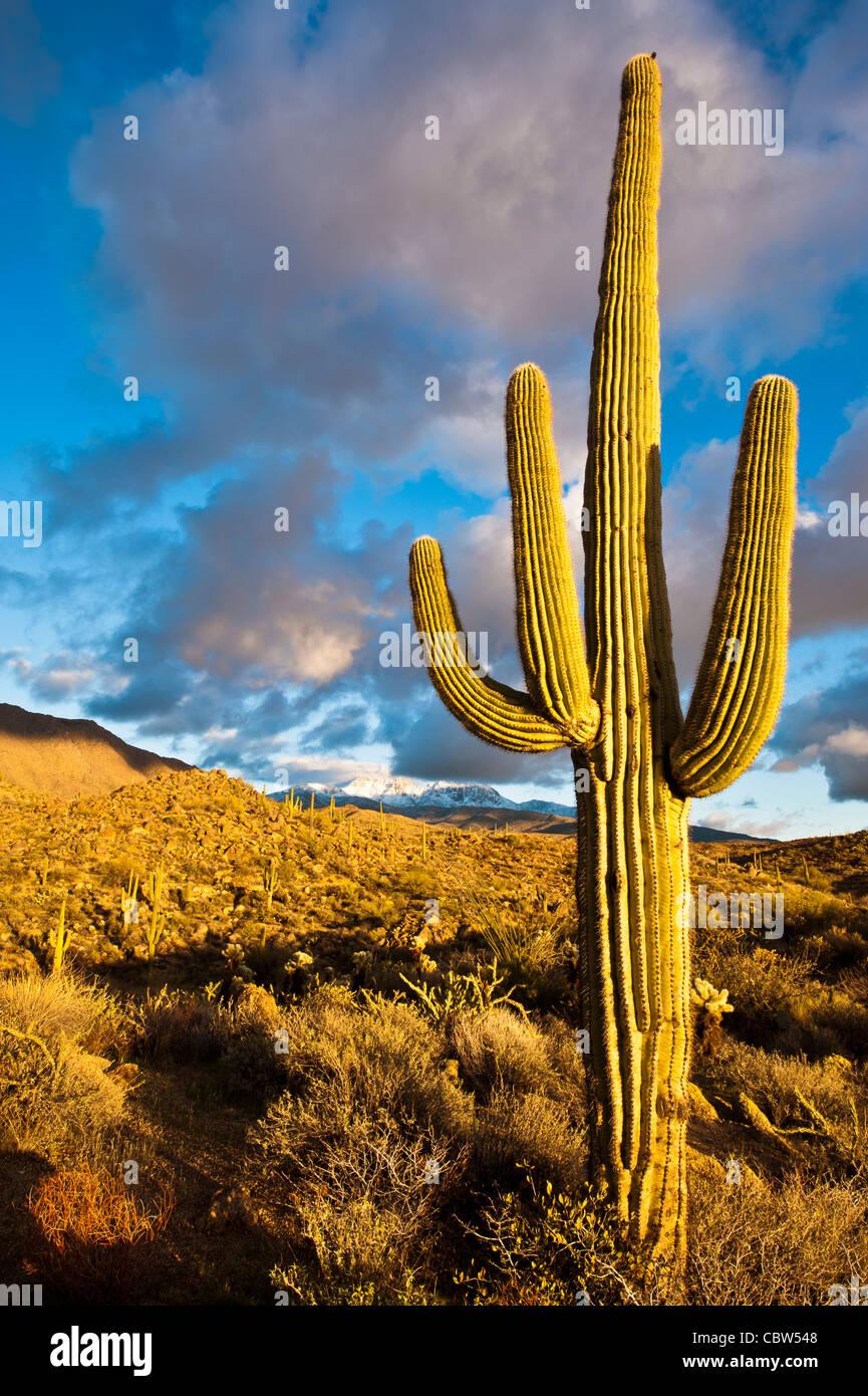 Quatre Pics (Yavapai: Wikopa, à 7657 pieds (2335 m) d'altitude, est un repère important sur Photo Stock