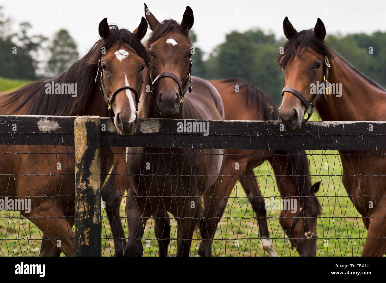 HORSE FARM GAND NEW YORK Photo Stock