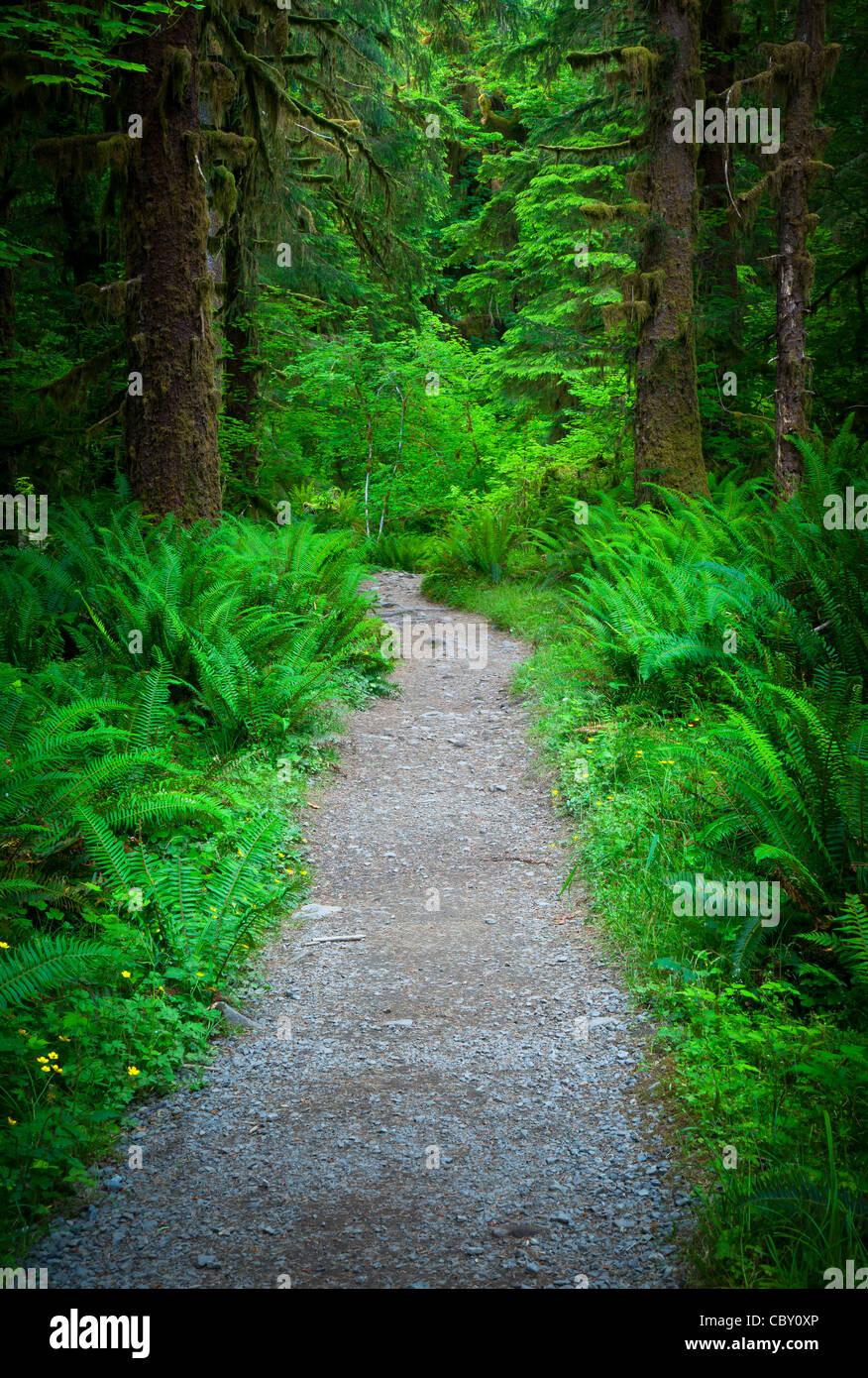 Sentier de la rivière Hoh Hoh en forêt tropicale du Parc National Olympique Photo Stock