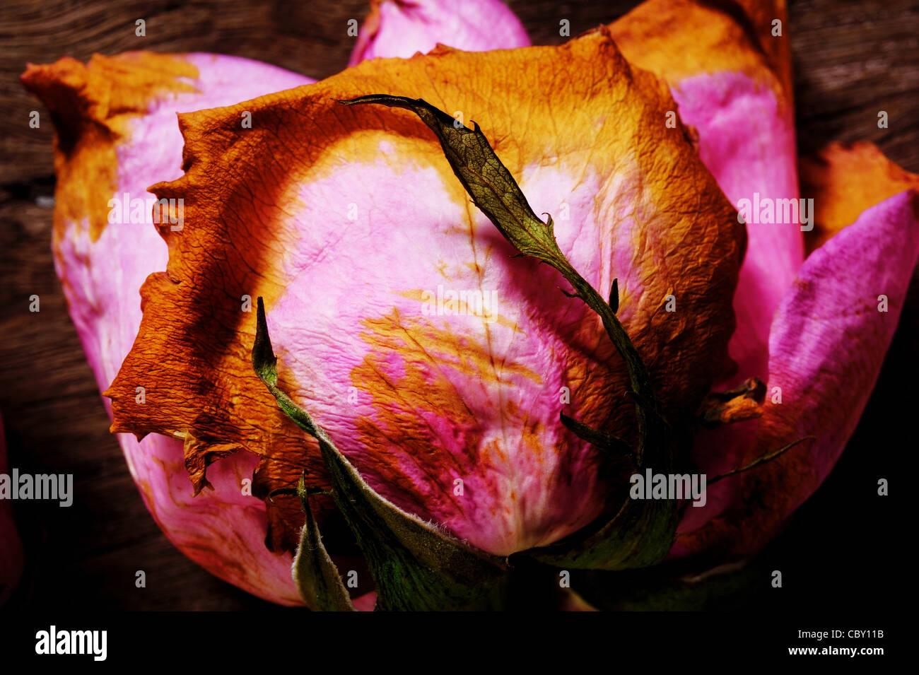 Roses roses séchées sur un sol en bois Photo Stock