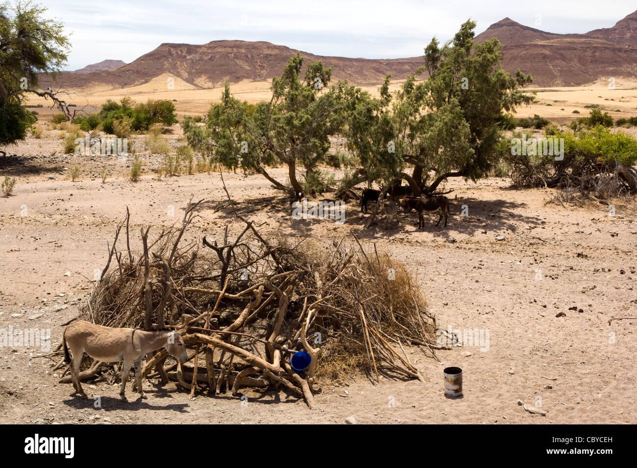 Waterhole - Kaokoland - région de Kunene, Namibie, Afrique Banque D'Images