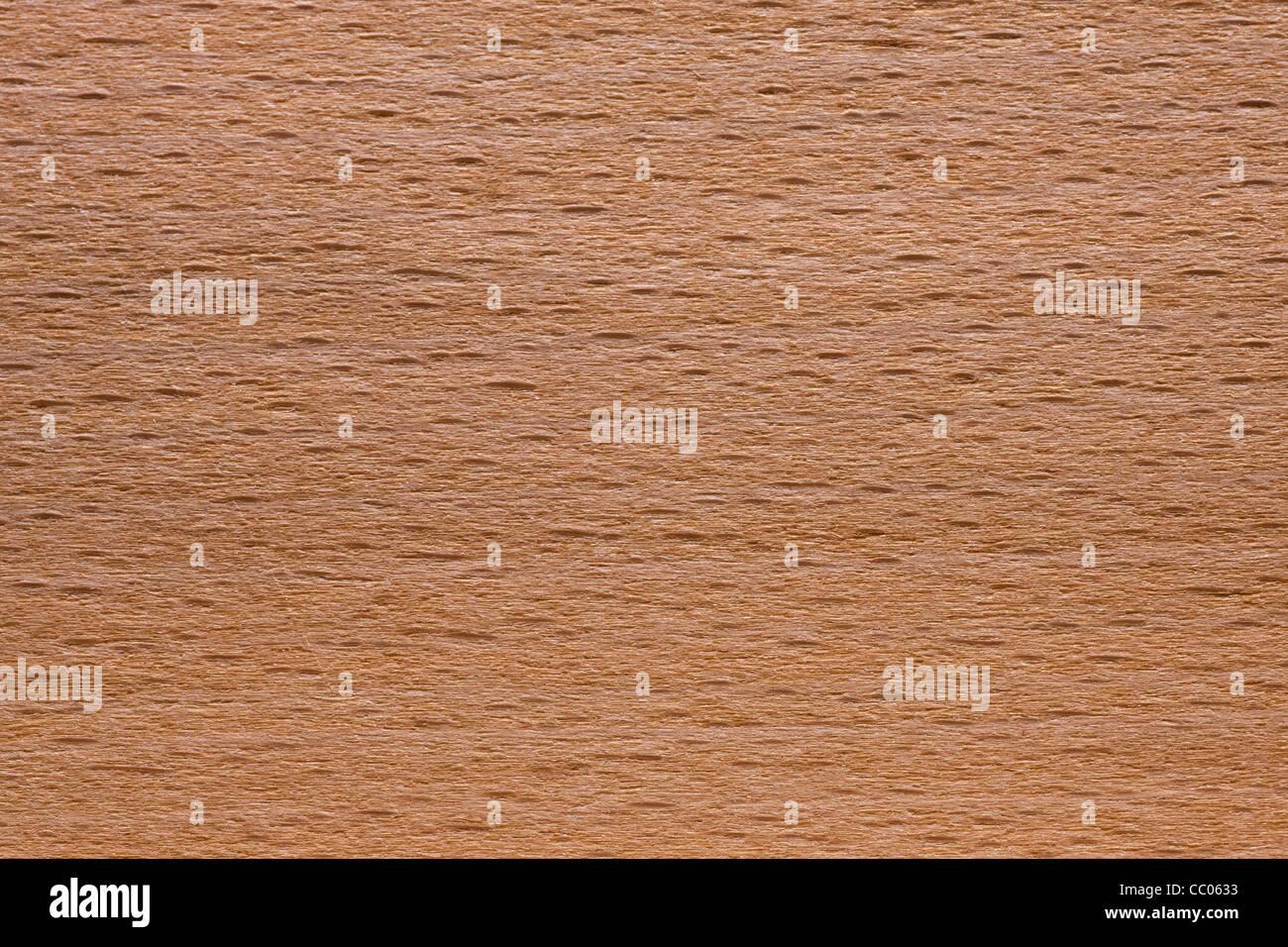 Grain du bois d'hêtre / hêtre commun (Fagus sylvatica), Europe Photo Stock