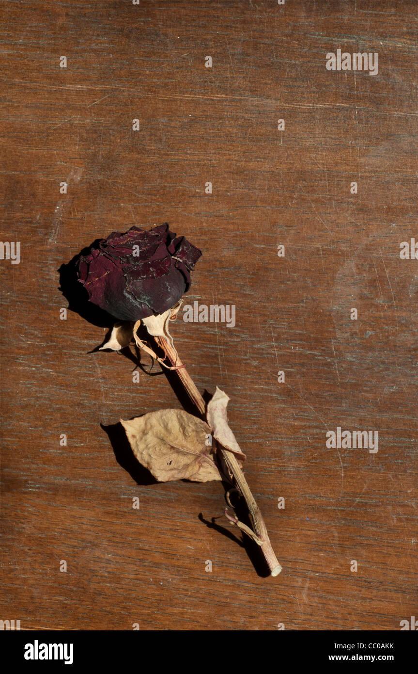 Rose sèche Banque D'Images