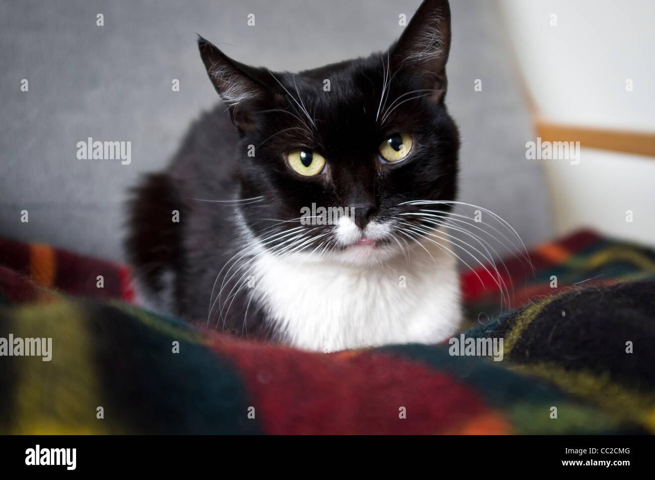 bigfat noir chatte fait maison pipe compilation