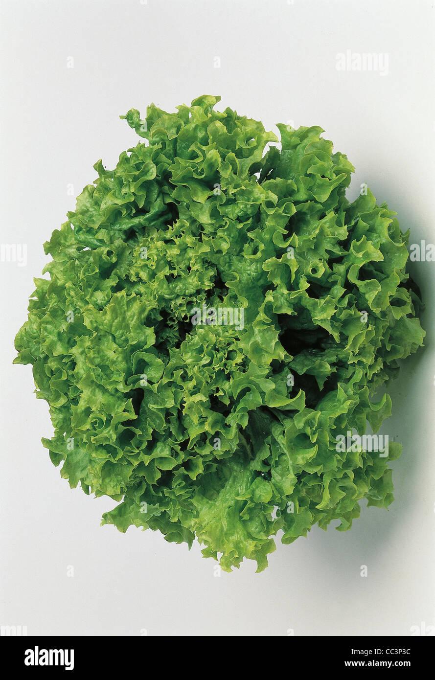 Salade de vie encore Photo Stock